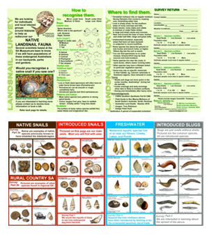 Bugs n Slugs Resources